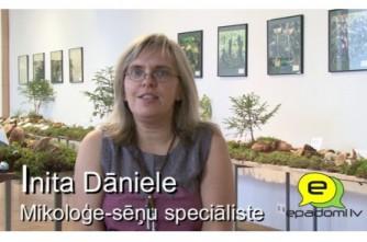 """Video: """"Ēst vai neēst cūcenes, izlemiet paši"""":intervija ar Latvijas Dabas muzeja mikoloģi, sēņu speciālisti Initu Dānieli"""