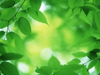 Zaļā ceturtdiena un tās nozīme