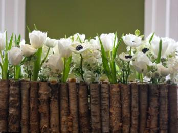 Lai iegūtu ziedus līdz 8.martam, stādīt jāsāk jau novembrī