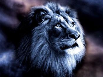 Saderības horoskops. Kāds ir sievietei Lauvai piemērotākais partneris