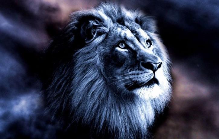 Saderības horoskops. Kāds ir Lauvas sievietei piemērotākais partneris