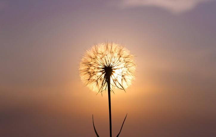 Paverot plīvuru! Pieredze ar parapsiholģiju jeb Laimes liešana un Sapņi