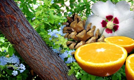 Kā izvēlēties smaržas sievietei atkarībā no viņas temperamenta