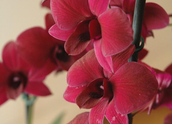 """Dabas muzejā šogad pirmā ziedu izstāde """"Orhideju un citu eksotisko augu daudzveidība''"""
