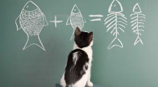 Tests: vai tu labi saproti savu kaķi?