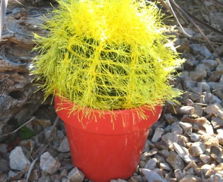 Foto: Interesanti adījumi- adīti un tamborēti kaktusi