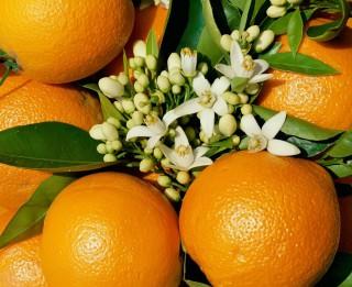 Apelsīns možumam, veselībai un skaistumam