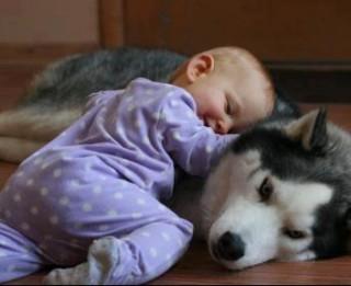 Dzīvnieku loma bērna attīstībā