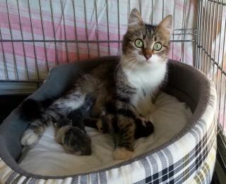 Labajās mājās sākusies kaķēnu sezona. Adoptē draugu
