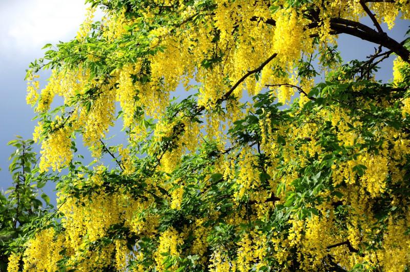 Koku dziedējošās īpašības un enerģijas apmaiņa ar kokiem