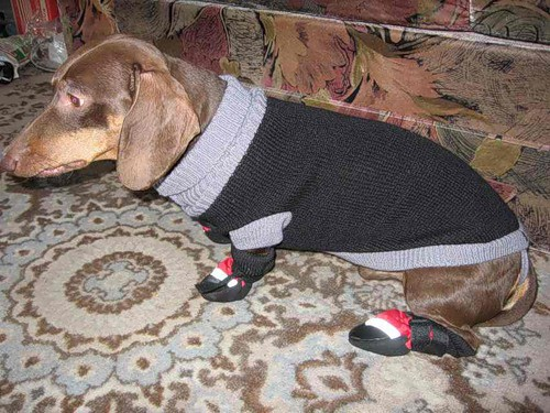 Kā vienkārši uzmeistarot apģērbu un gultiņu savam suņukam